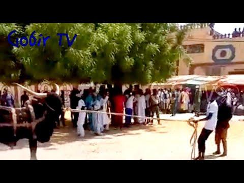 Download Wasan Hawan Ƙaho a Katsinar Maradi 2021 | Hausa Bull Fighting Festival on Eid eve