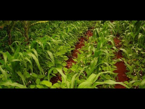 Ideal Farmer Earn High Profits From Organic Farming | Nela Talli | HMTV