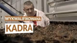 Grzybek Łosicki - największa polska grupa producentów pieczarek