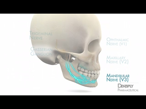 Mandibular Anesthesia Injection Techniques | DENTSPLY Pharma