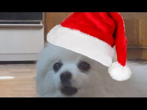 It's Beginning to Look A Lot Like Christmas - Gabe the Dog - YouTube