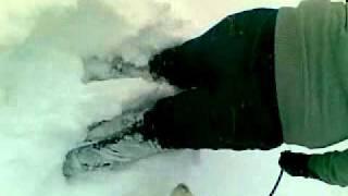 Siberian Husky In The Uk Snow 2010