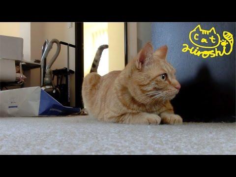 茶トラ猫「ひろし」を観察(固定カメラ)。2階で何してる⁇⁇⁇