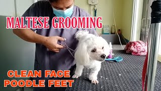 MALTESE GROOMING | CLEAN FACE POODLE CUT FEET