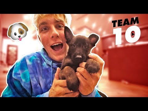 Thumbnail: I ACTUALLY BOUGHT A PUPPY **not clickbait**