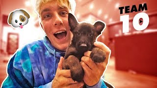I ACTUALLY BOUGHT A PUPPY  **not clickbait** thumbnail