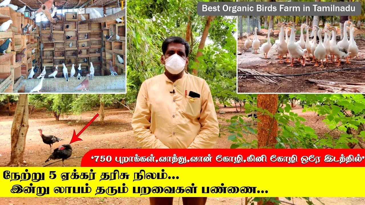 நேற்று தரிசு நிலம்.. இன்று லாபம் தரும் இயற்கையான முறையில் பறவைகள் வளர்ப்பு | Best Birds Farm