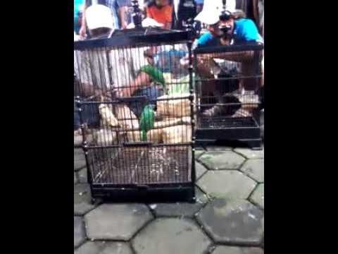 Pasar Burung Magelang Sasana Kukila Ramai Setiap Pahing Youtube