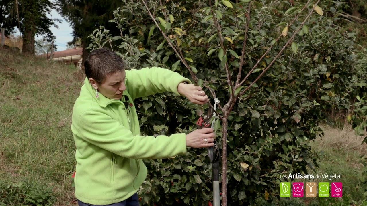 Quel Fruit Planter Au Printemps comment planter un cerisier ?