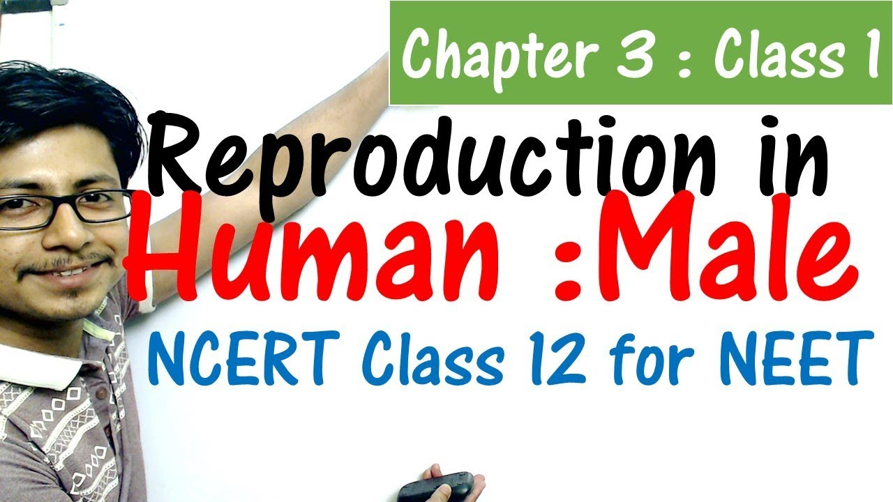 Male reproductive system class 12 | Reproduction in human CBSE class 12 biology for NEET exam