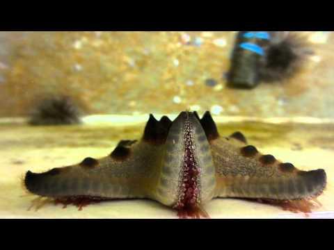 UF Marine Biology 2015