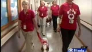 Happy Tails Pet Therapy Cbs Atlanta News At 11 12-28-09 Cbs Atlanta News .mp4