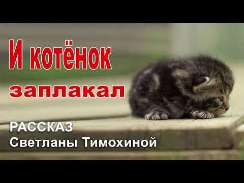 ✔И котёнок заплакал... Новый Рассказ 2020, Светлана Тимохина. Христианский рассказ МСЦ ЕХБ