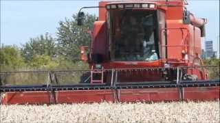 case ih axial flow 2388 x clusive in france moisson du bl 2012