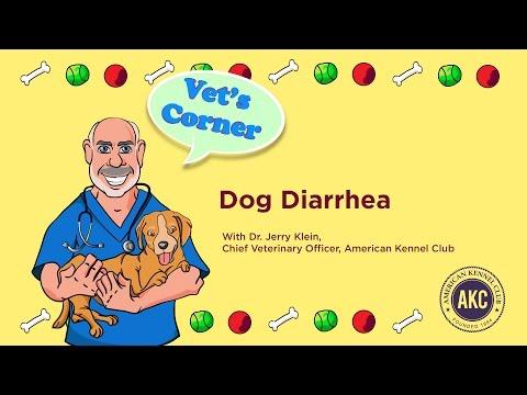 Dog Diarrhea   AKC Vet's Corner with Dr. Jerry Klein