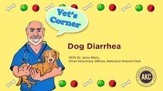 Dog Diarrhea | AKC Vet's Corner with Dr. Jerry Klein