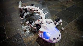 Meet Pleurobot, an Amphibious Robot!