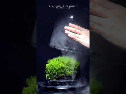 Two-year-old Live Moss Terrarium with fog by TerraLiving