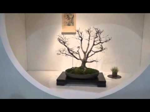 Philly Flower Show 2016 Bonsai Society Display
