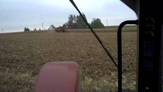 Running a grain cart in corn with Google Glass 1