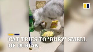 Cat tries to 'bury' smell of durian