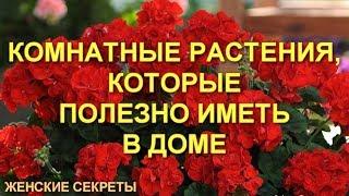 Комнатные растения, которые полезно иметь в доме.Цветы в доме. Комнатные цветы.Flowers in the house.