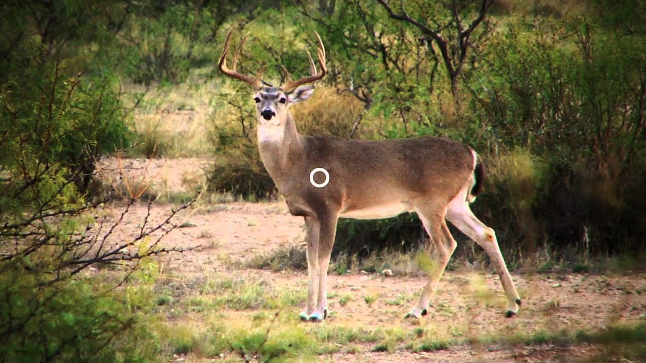 maxresdefault where to shoot a deer with a rifle diagram