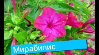 Название цветов.