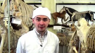 видео Музеи кафедры анатомии человека
