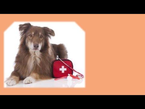 тепловой удар ( гипертермия )  у собаки