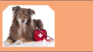 тепловой удар  (  гипертермия  )  -  у собаки