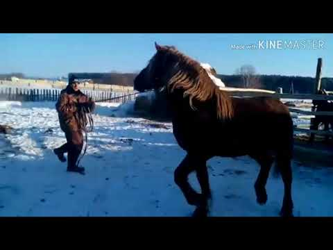 Продажа лошадей 14.02.19