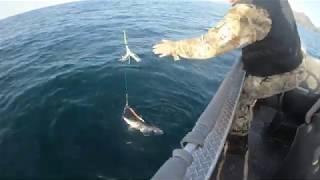 Морская Рыбалка 2019 в Норвегии