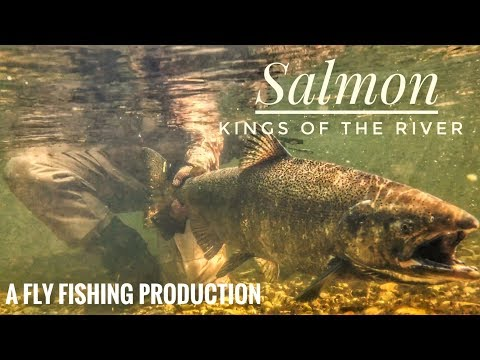 """Pere Marquette King Salmon Fishing Michigan 2017! """"Kings of the River"""""""