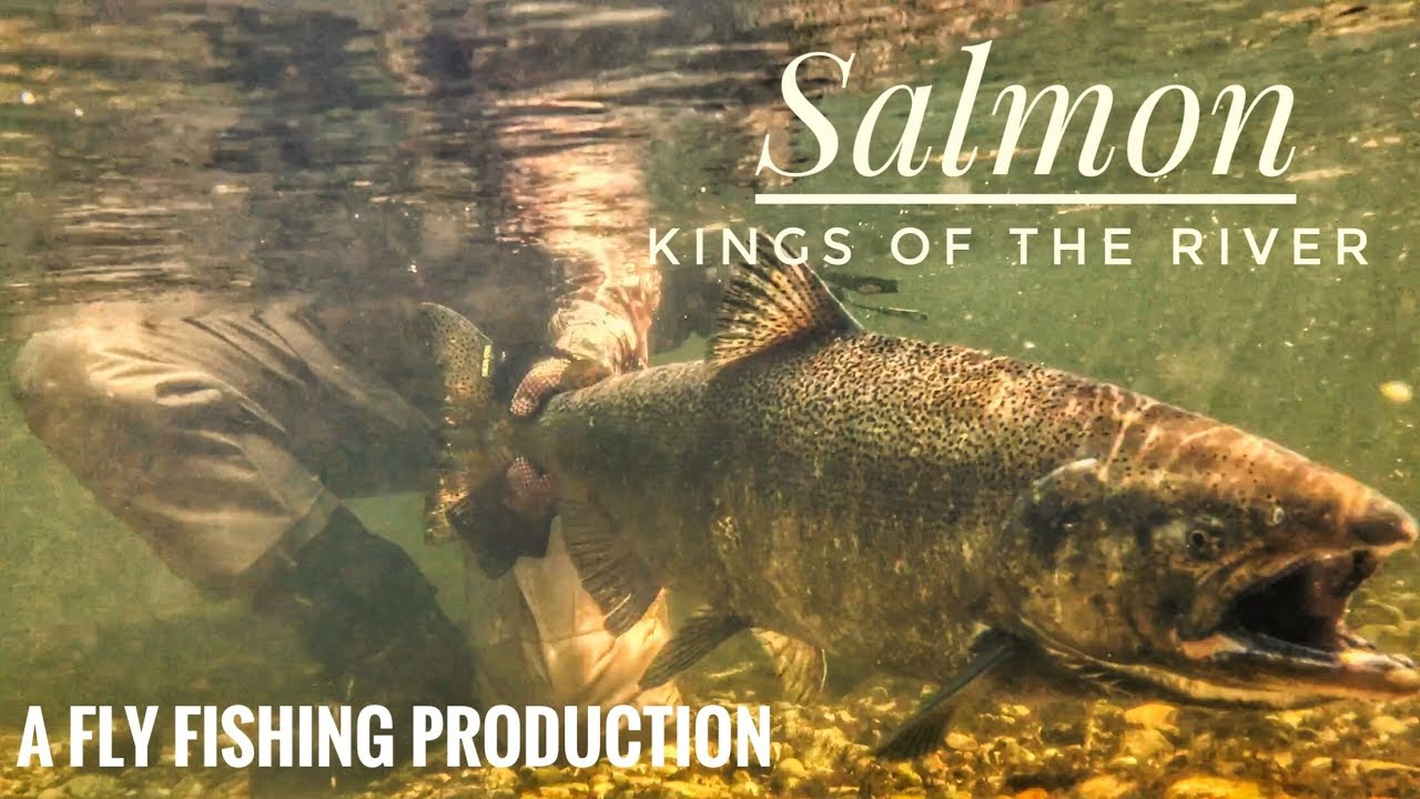 Pere Marquette King Salmon Fishing Michigan 2017 Kings Of The River Youtube