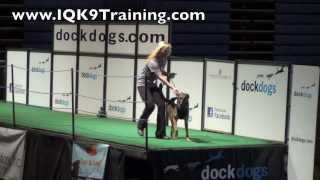 Iq K9 Training | Oceanside Trainer Competing In Dog Sport World Championship