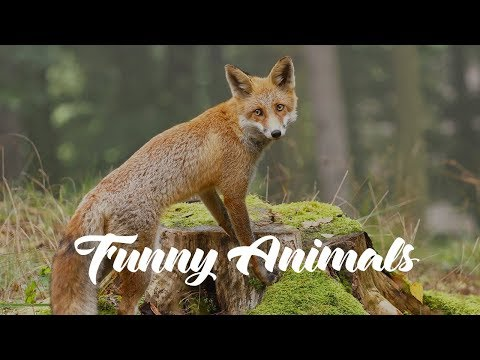 Cute and Funny Pets and Wild Animals