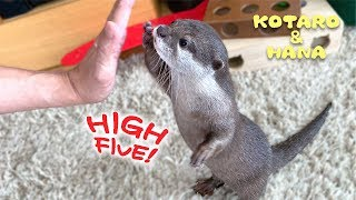 Otter Kotaro&Hana So Cute High Five!