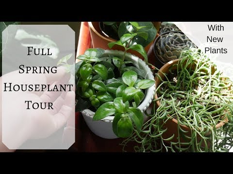 Full Houseplant Tour | May 2019