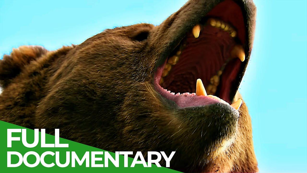 Download Wildlife World: Bears | Free Documentary Nature