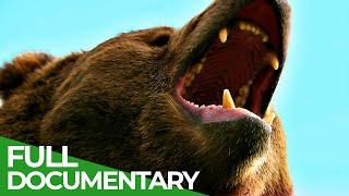 Wildlife World: Bears | Free Documentary Nature