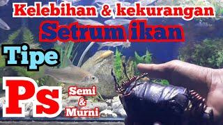 Setrum Ikan Platina Kelebihan Dan Kekurangan Tipe Ps Semi Dan Ps Murni Youtube