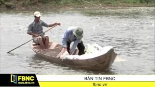 FBNC - Sẽ siết chặt quy trình nuôi cá tra, basa