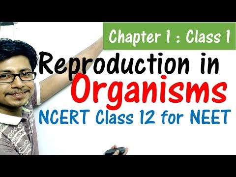 Reproduction in organisms class 12 NCERT | NEET biology preparation from NCERT class 12 biology book thumbnail