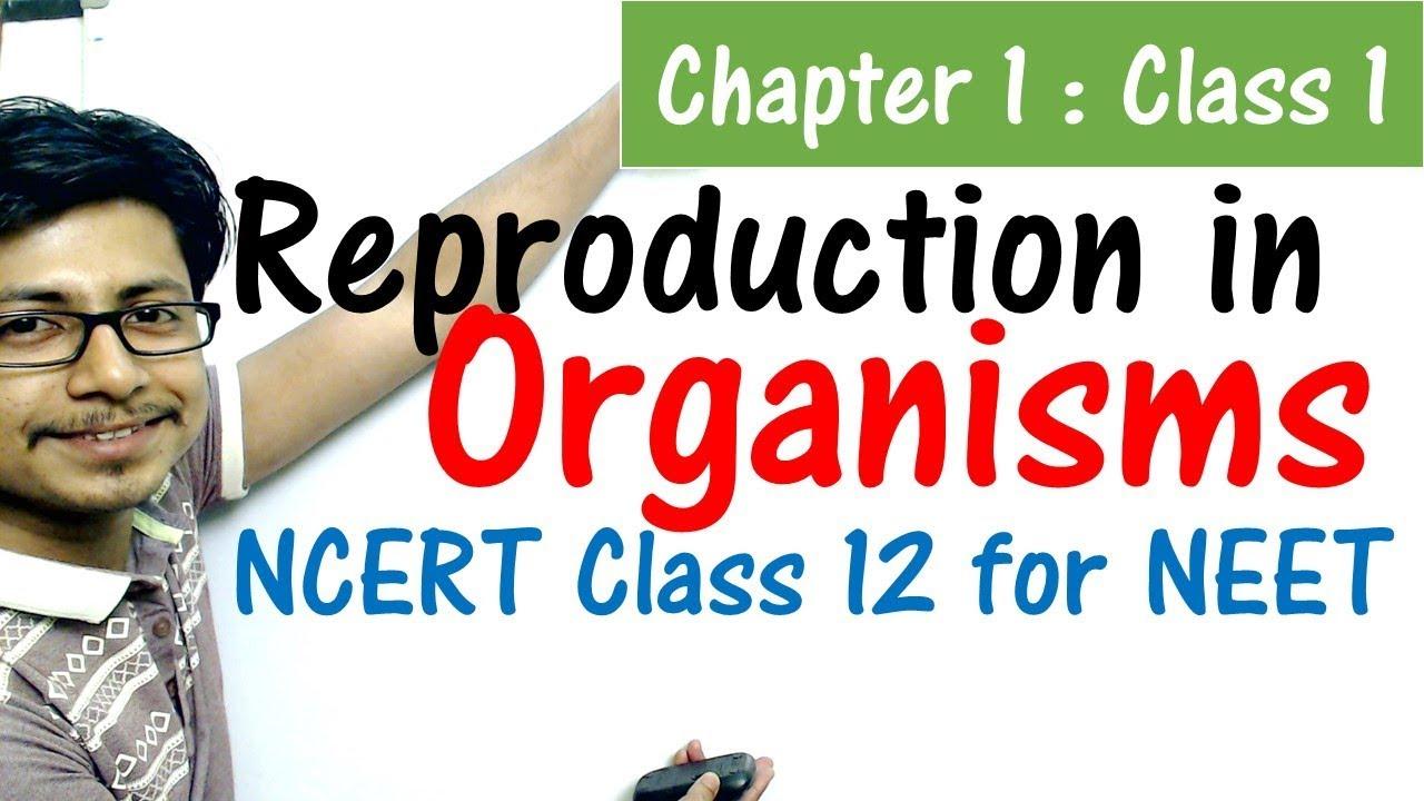 Reproduction in organisms class 12 NCERT   NEET biology preparation from  NCERT class 12 biology book