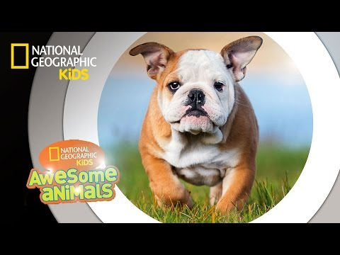 Dog Genius | Awesome Animals