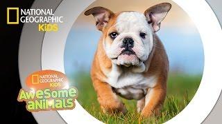 Dog Genius   Awesome Animals
