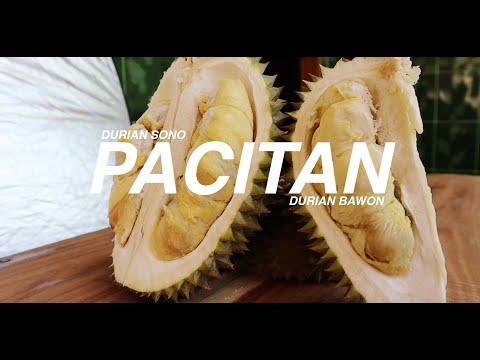 Jawa Pos Belah Durian Edisi 6: Durian Sono Pacitan