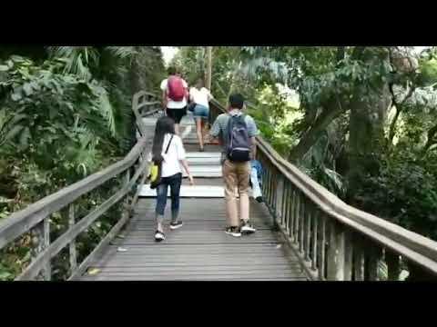 politeknik-nasional-denpasar---monkey-forest,-ubud,-bali