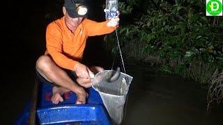 Thả câu chai nhựa bằng mồi ong vò vẽ l Fishing VIETNAM